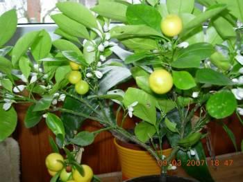citrusy 1.jpg